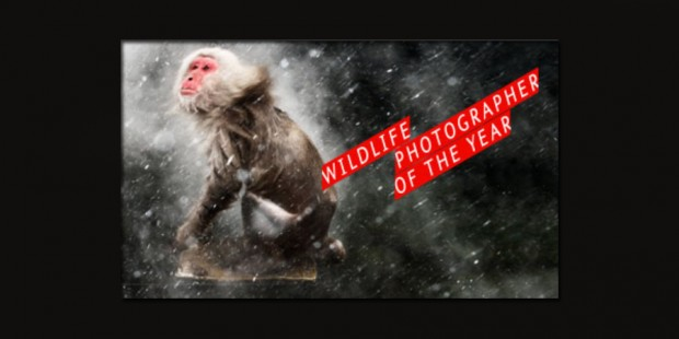 Young Wildlife Photographer of the Year 2013