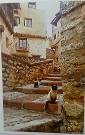 Albarracín Gatos