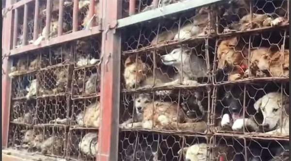China perros y gatos para comer